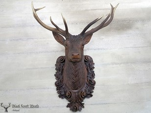 Awesome Madel and Sohn Stag head